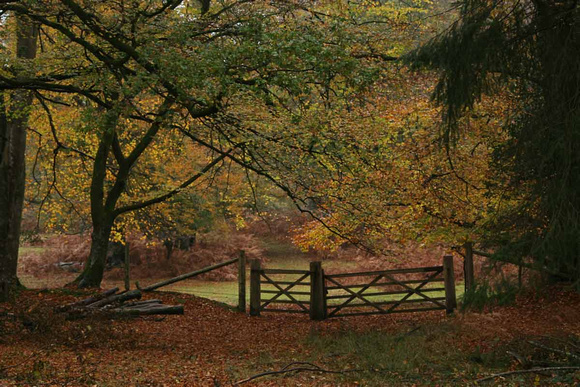 Autumn in New Forest